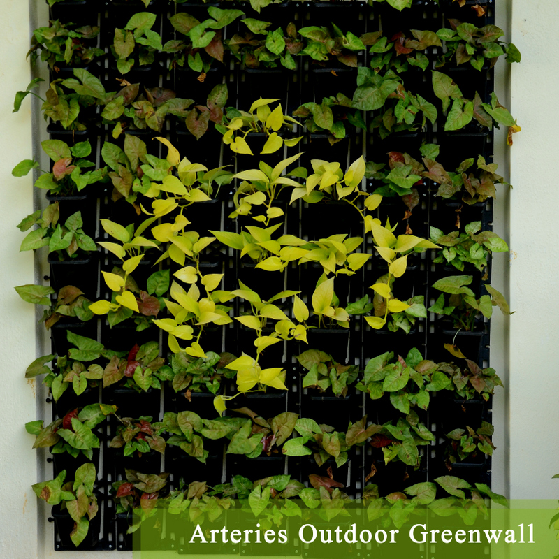 Arteries Outdoor Greenwall - Ramakrishna copy